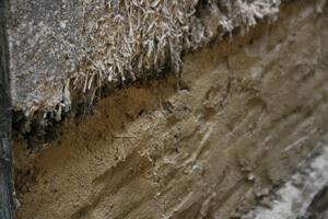 土壁は最も多くの菌たちが暮らす蔵の命。